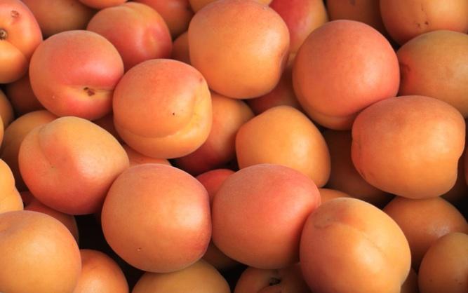 Abricots bio cultivés dans la Drôme