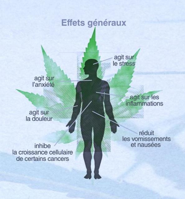 Les effets benefiques du cannabis sur le corps