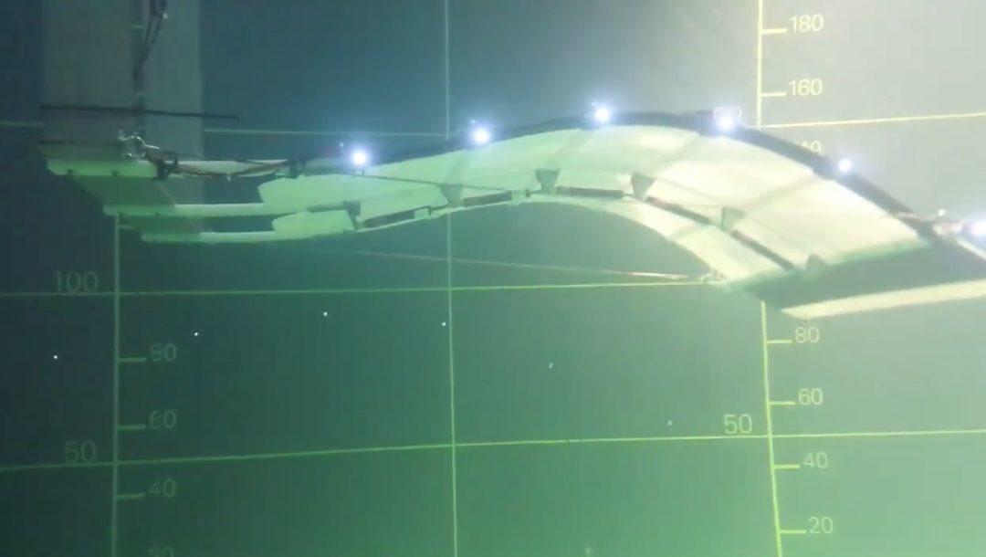 Grâce à Eel Technology,l'ondulation devient énergie